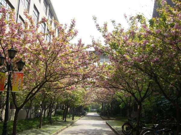 上海财经大学小路